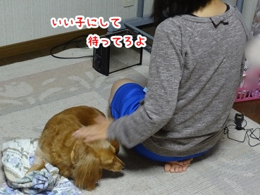 kinako927.jpg