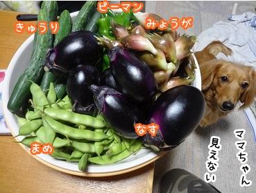 kinako932.jpg