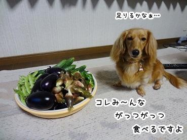 kinako933.jpg