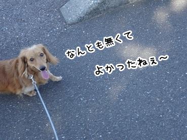 kinako944.jpg