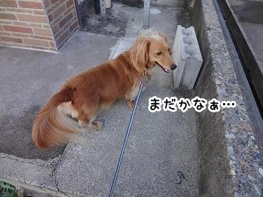 kinako945.jpg