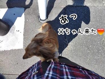kinako947.jpg