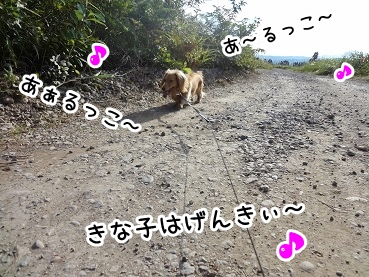 kinako950.jpg