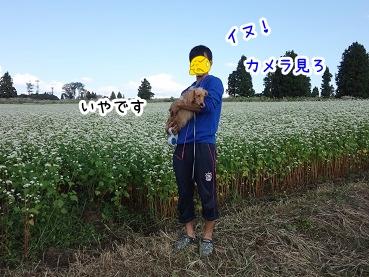 kinako952.jpg