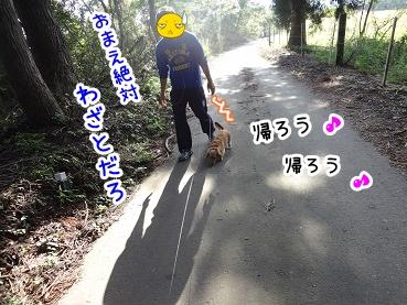 kinako966.jpg