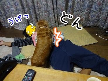 kinako972.jpg