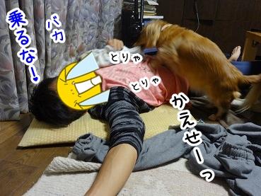 kinako975.jpg