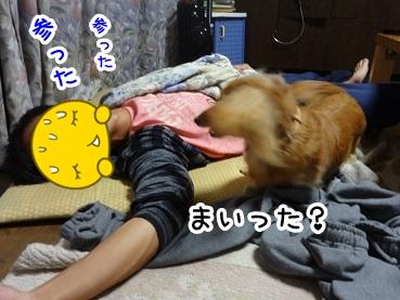 kinako976.jpg