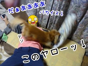 kinako978.jpg