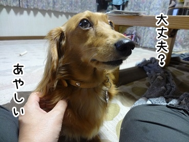 kinako981.jpg