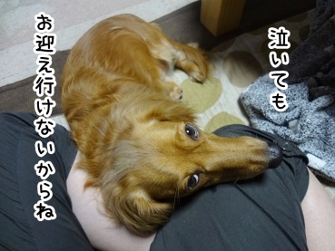 kinako983.jpg