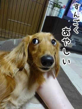 kinako993.jpg
