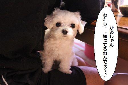 IMG_7680_1 かあ 1