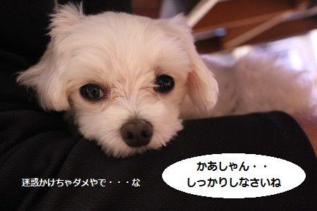 IMG_7689_1 ちゃんと 2