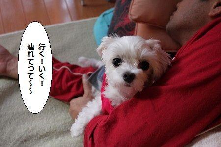 IMG_8110_1 いく 1