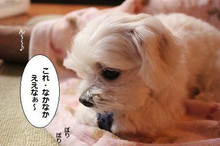 IMG_0612_1 これ 2