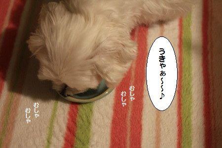 IMG_0828_1 うきゃ1