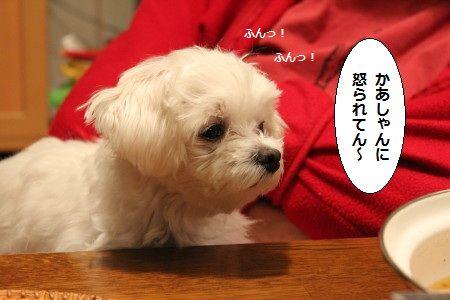 IMG_1567_1 かあ 1