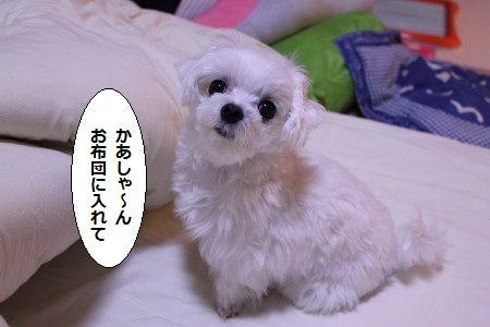 IMG_1601_1 かあ1