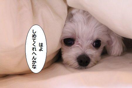 IMG_1612_1 しめ1