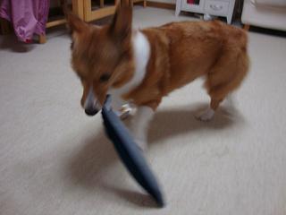 サンマの玩具と杏2