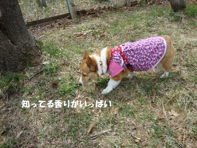 ジプシー杏
