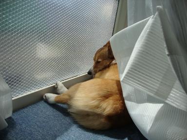 出窓で杏2