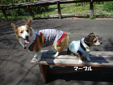ジプシー紋兄&マーブル