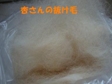 杏の抜け毛