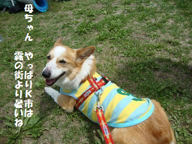 運動会観戦 紋兄