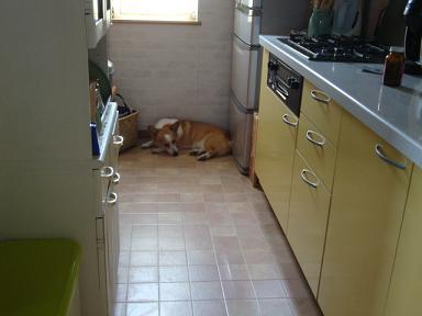 冷蔵庫前で紋兄2