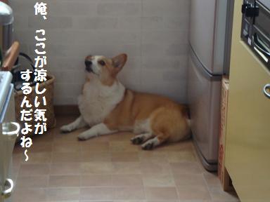 冷蔵庫前で紋兄