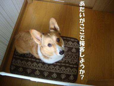 階段横で杏