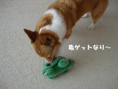杏さんと亀