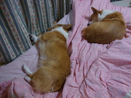 2ショット寝2