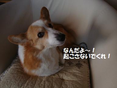 シャンプー後紋兄2