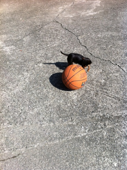 ボールぐるぐる