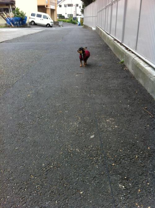 こまめ歩かない2