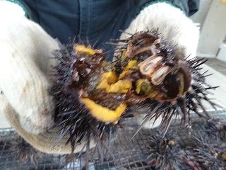 「小砂子漁業部担い手」さんの焼ウニ