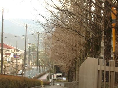 yukimau3.jpg
