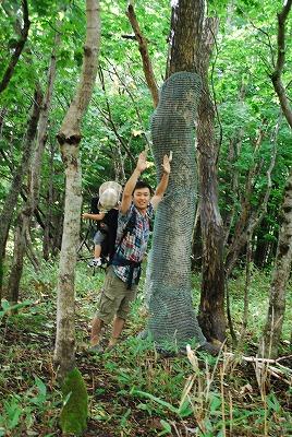 森のたね 知床 樹皮剥ぎ防止ネット