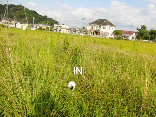 CIMG0124-1.jpg
