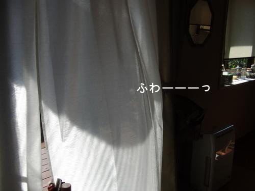 CIMG0317-1.jpg