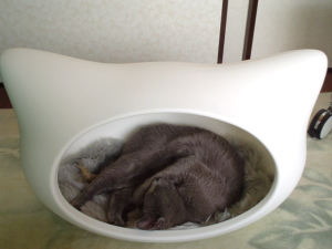 猫型ハウスとオロ