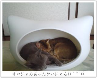 猫型ハウス2