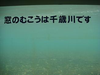 DSC03662.jpg