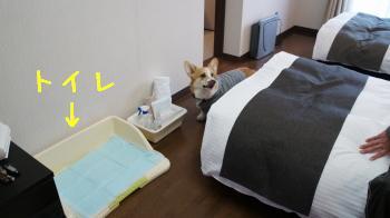 21このトイレが・・・