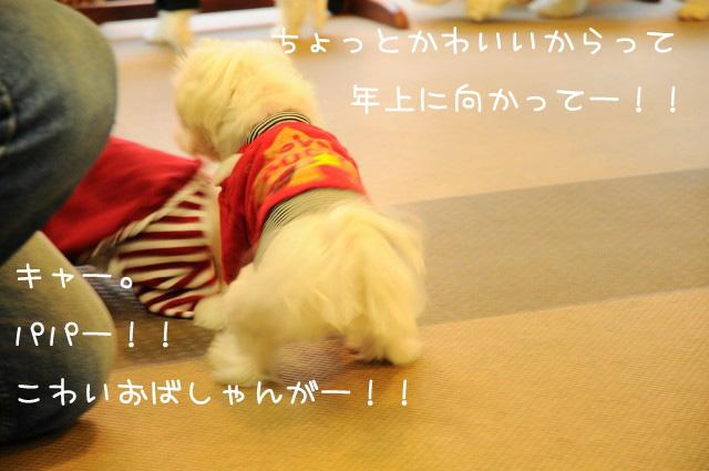DSC_3171文字