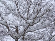 tntnH24-02-29雪の庭 (3)