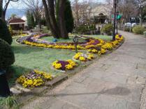 tntnH24-04-13ハーブ庭園のビオラ (2)